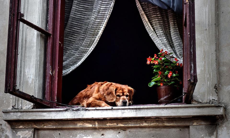 Viajar con mascotas. Apartamentos pet friendly